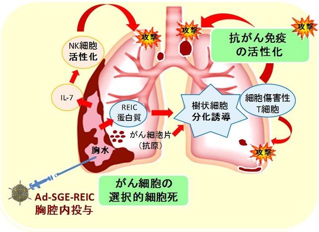 がん細胞選択的アポトーシス